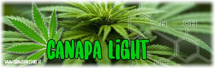 Canapa Light growshopstore.it
