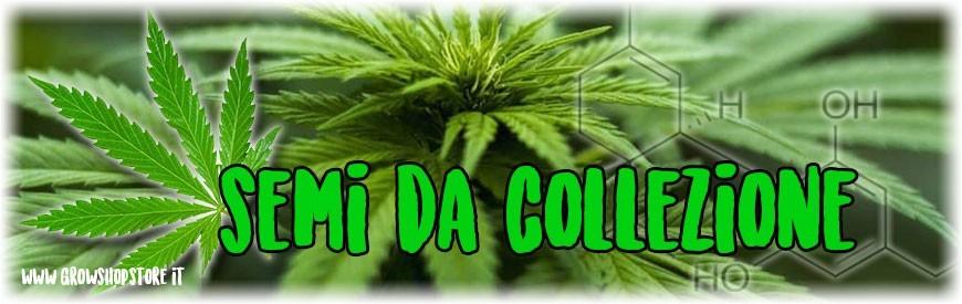 Semi Da Collezione growshopstore.it